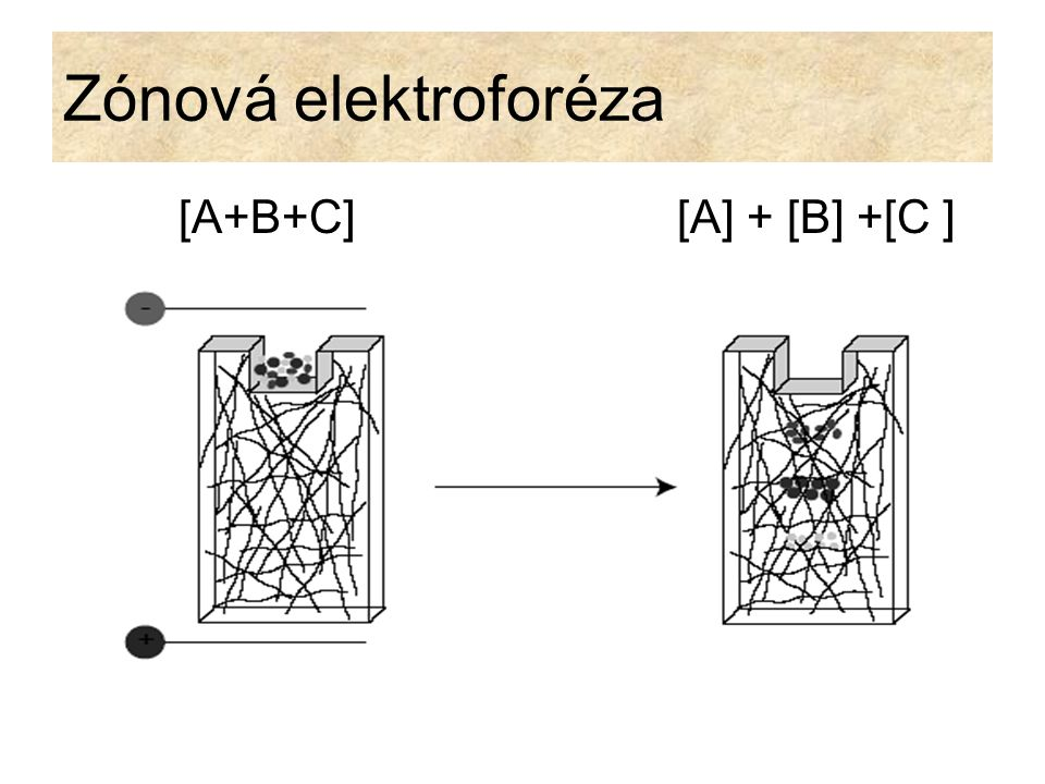 Zónová elektroforéza [A+B+C] [A] + [B] +[C ]